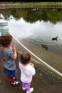 Duck feeding at Fagan Park